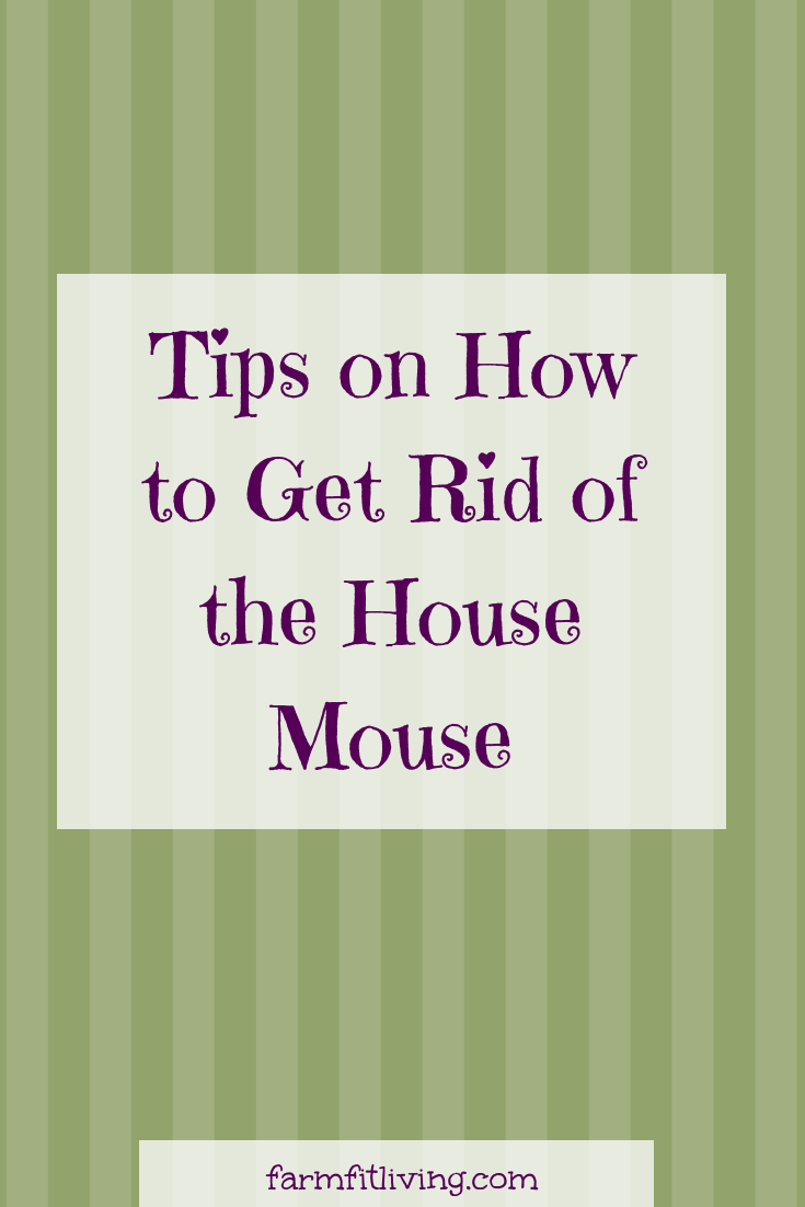 Are you in need of some great tips for how to get rid of the house mouse? Get control of your house with these tricks and products! #mousehole #mousehunt #mousekiller #Mousetraps