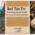 Best Tips for Growing Great Garlic