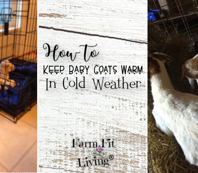 How to Keep Baby Goats Warm in Cold Weather