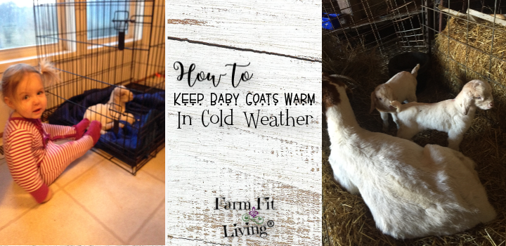 How to Keep Baby Goats in Cold Weather