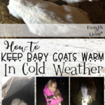How to Keep Baby Goats Warm
