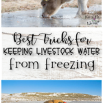 Best Tricks for Keeping Livestock Water from Freezing