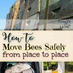 move bees safely
