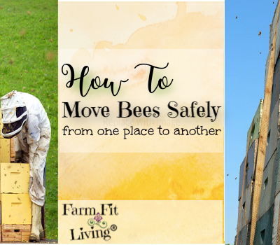 How to Move Bees Safely from One Place to Another