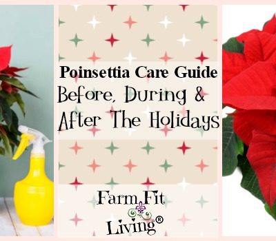 Poinsettia Care Guide: Proper Care Before, During & After the Holidays