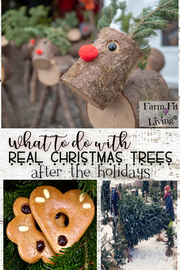 what to do with real Christmas trees after the holidays