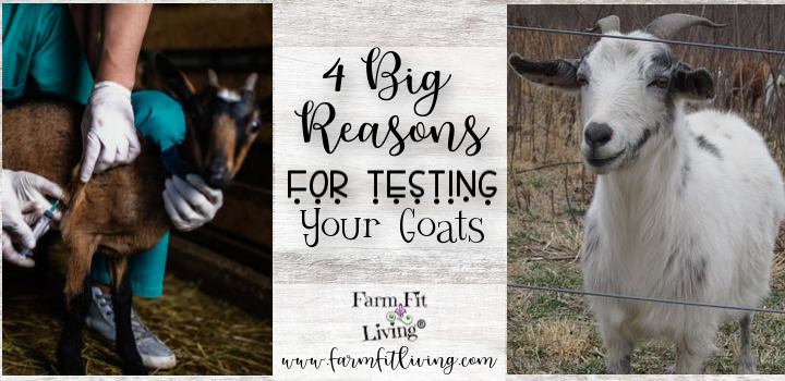 testing your goats