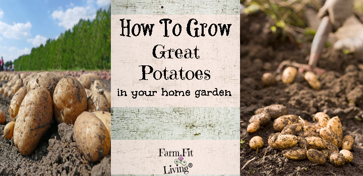 Grow Great Potatoes in your Home Garden