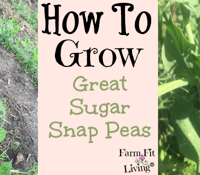 grow great sugar snap peas