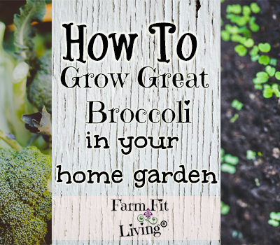 How to Grow Great Broccoli In Your Home Garden