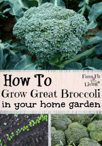 grow great broccoli