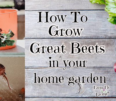 How to Grow Great Beets in your Home Garden