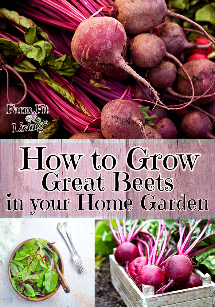 grow great beets