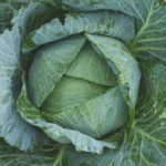grow great cabbage