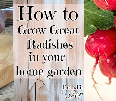 How to Grow Great Radishes In Your Home Garden