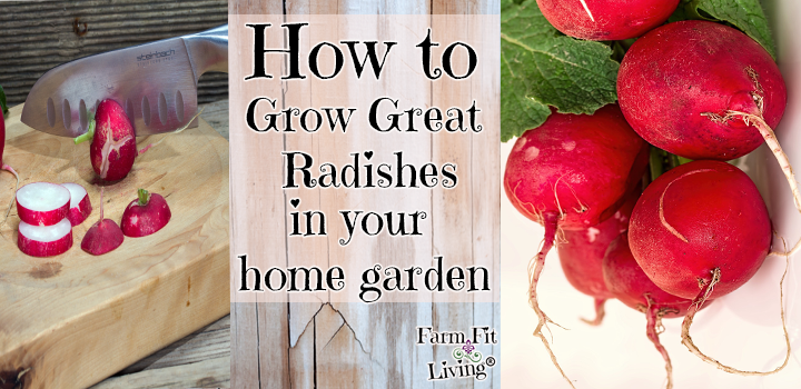 grow great radishes