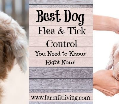 Best Dog Flea & Tick Control