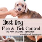 Best Dog Flea & Tick Control