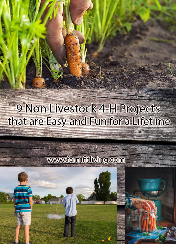 non livestock 4-H Projects