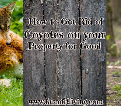 How to Get Rid of Coyotes on your Property for Good