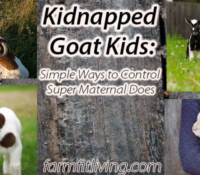 Kidnapped Goat Kids: Ways to Control Super Maternal Does
