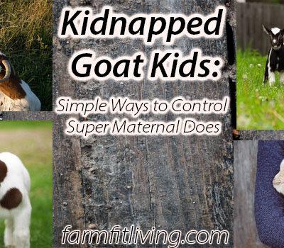 kidnapped goat kids