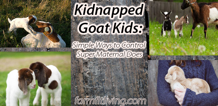 kidnapped goat kids