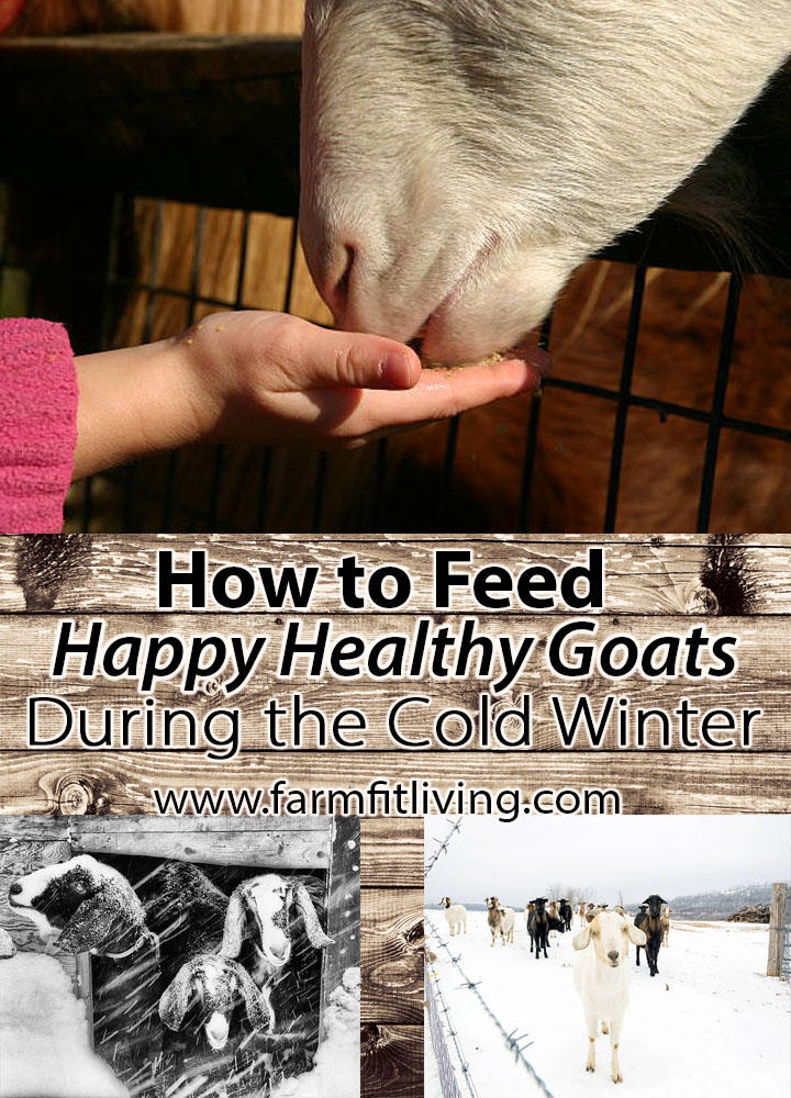 How to Feed Happy Healthy Goats During the Cold Winter