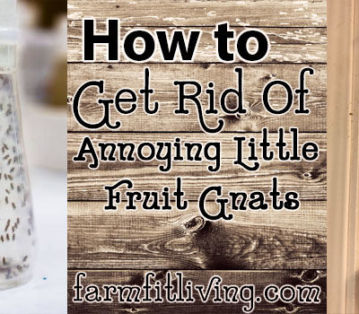 How to get rid of annoying little fruit gnats for good