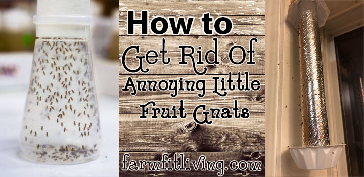 How to Get Rid of Annoying Little Fruit Gnats