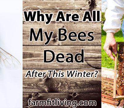 Why are all my bees dead after this winter?