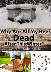 Why are all my bees dead