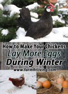 How to Make Your Chickens Lay More Eggs During Winter