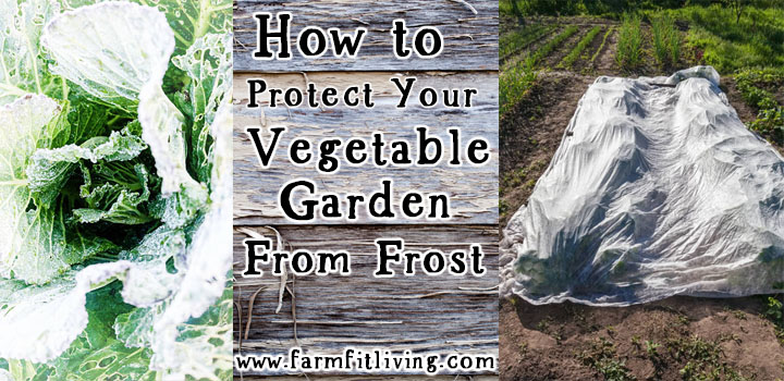 how to protect your vegetable garden from frost