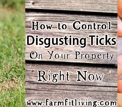 How to Control Disgusting Ticks On Your Property Right Now