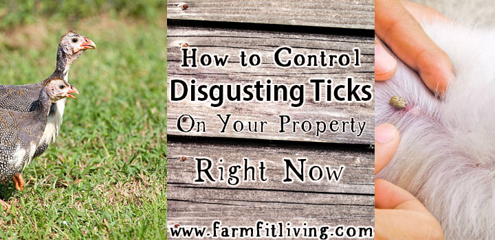 how to control discgusting ticks