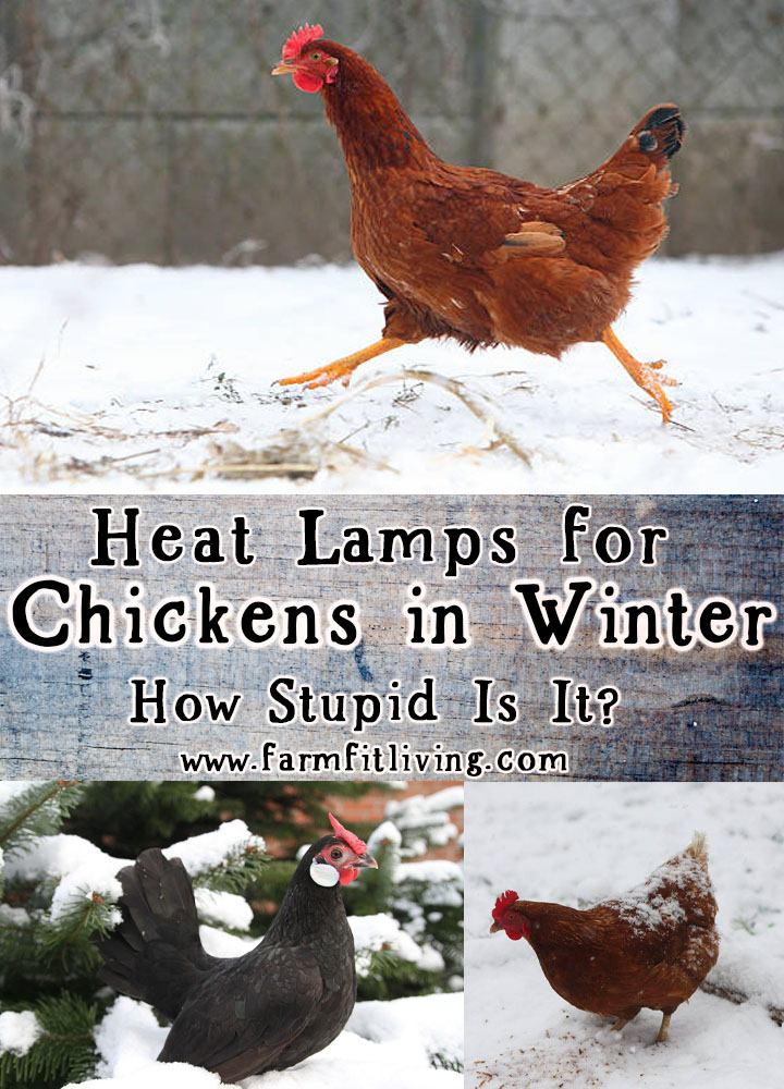 heat lamps for chickens in winter